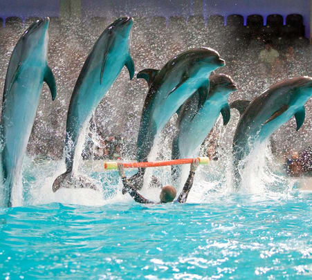 Dubai Dolphinarium Tickets - Flat 17% off