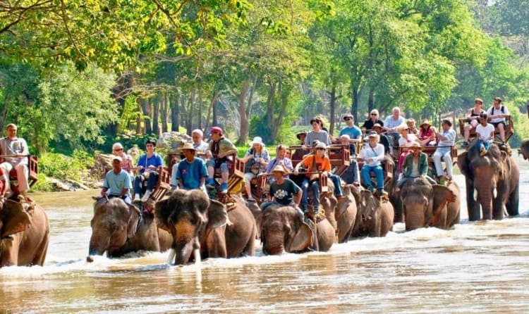 Image result for elephant camp chiang mai