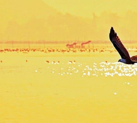 Island Camping in Chilika Lake, Odisha