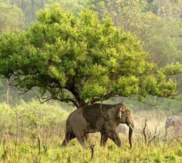 Jungle Safari at Jaldapara National Park