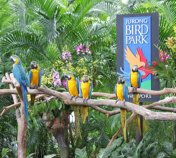 Visit to Jurong Bird Park