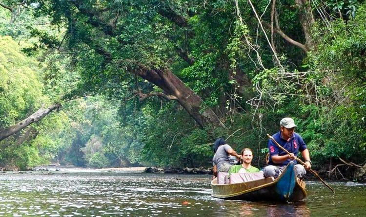 Visit Rainforest Taman Negara