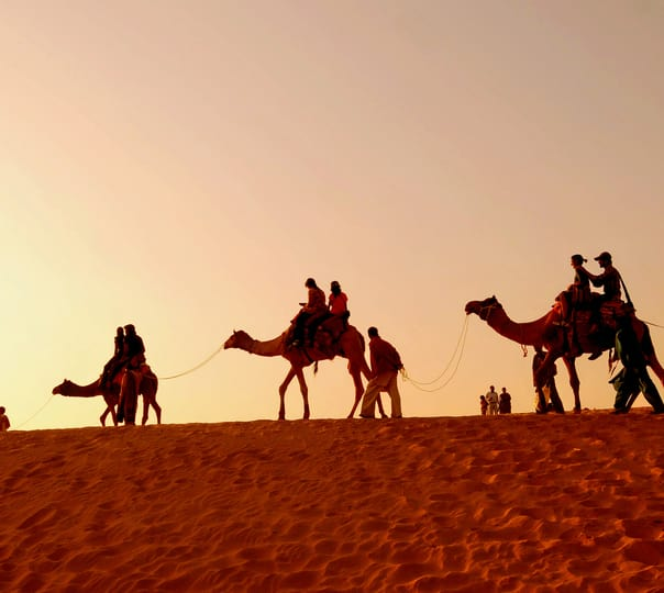 Half Day Sunrise Camel Safari in Jaisalmer