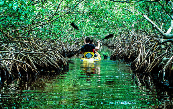 1496147429_rowing-through-the-mangroves-1.jpg