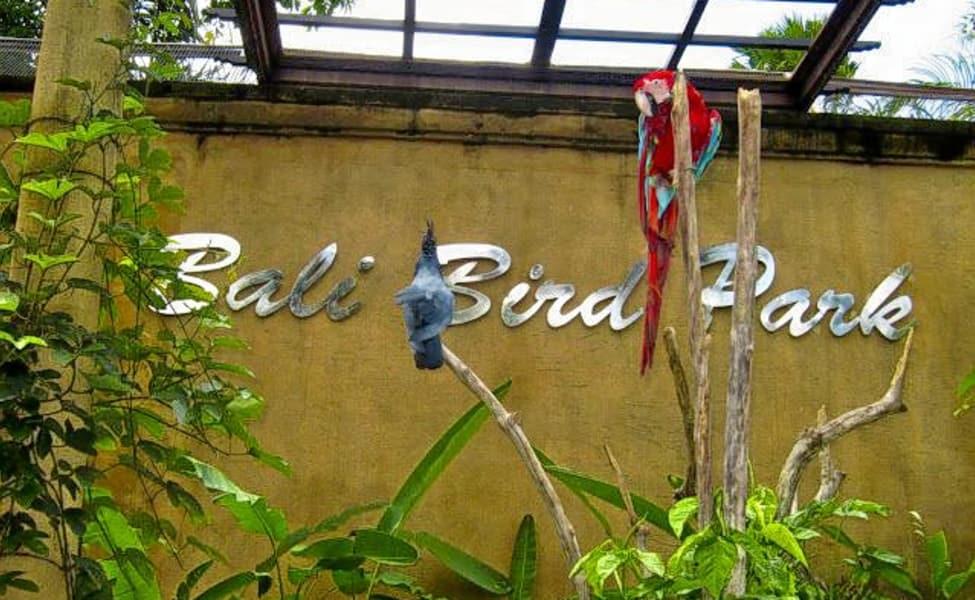 Bali Bird Park Admission Ticket Thrillophilia