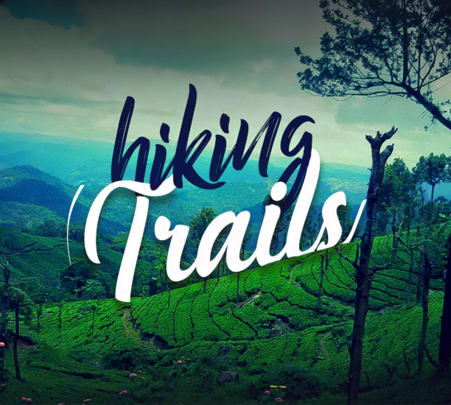 Trek to Top Station Munnar in Kurangani Hills