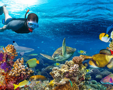 Scuba Diving in Bali- Flat 20% off