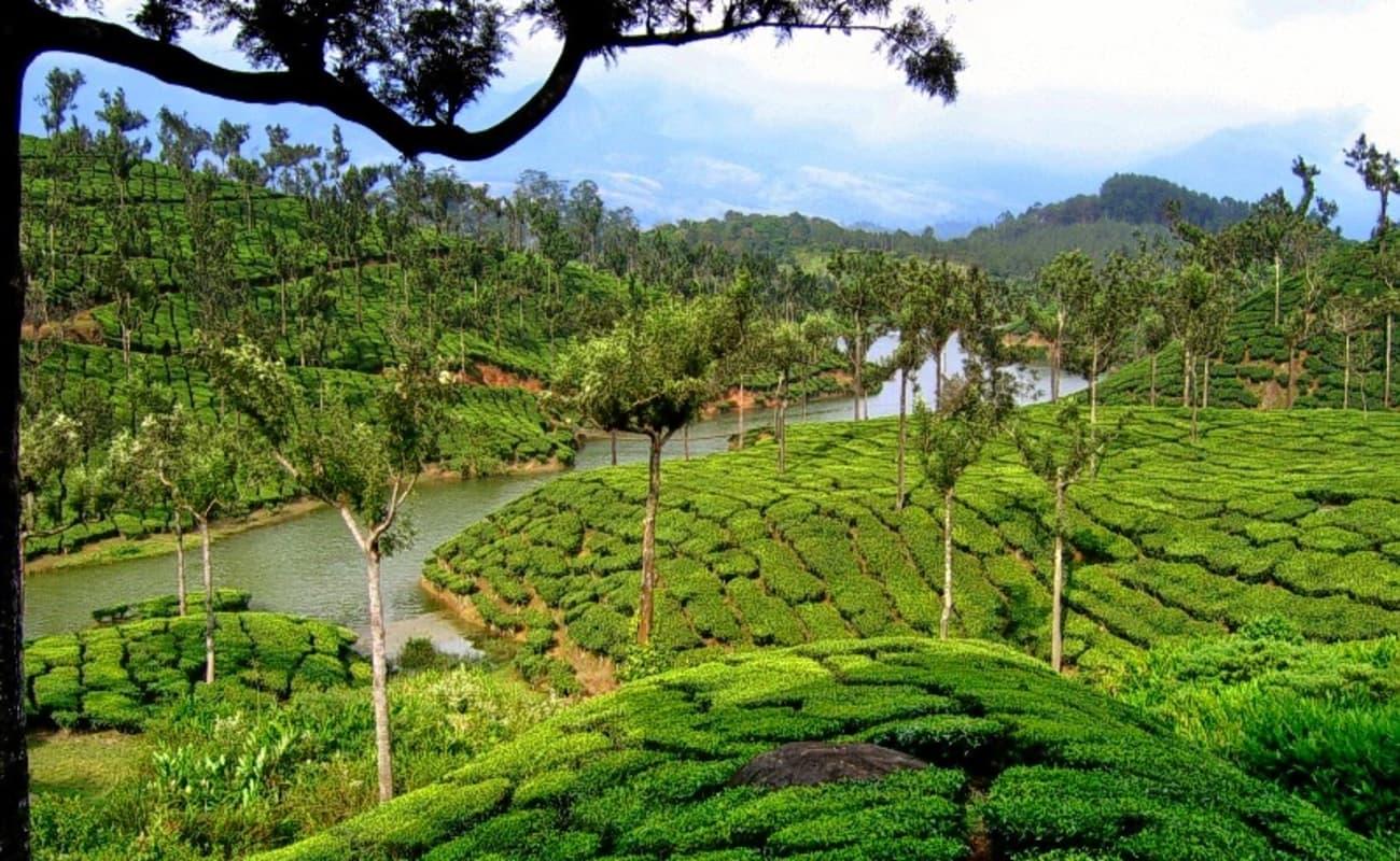 Kerala Beach, Backwater & Tea Gardens Tour | Thrillophilia