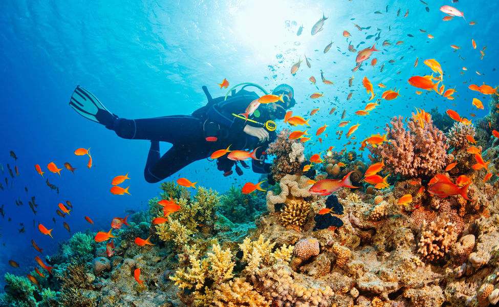 50 Best Scuba Diving Places In The World