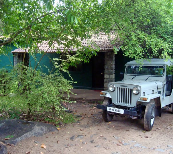 Jungle Trek and Camp in Mudumalai