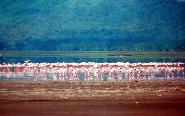 1481609178_flamingos_at_lake_nakuru.jpg