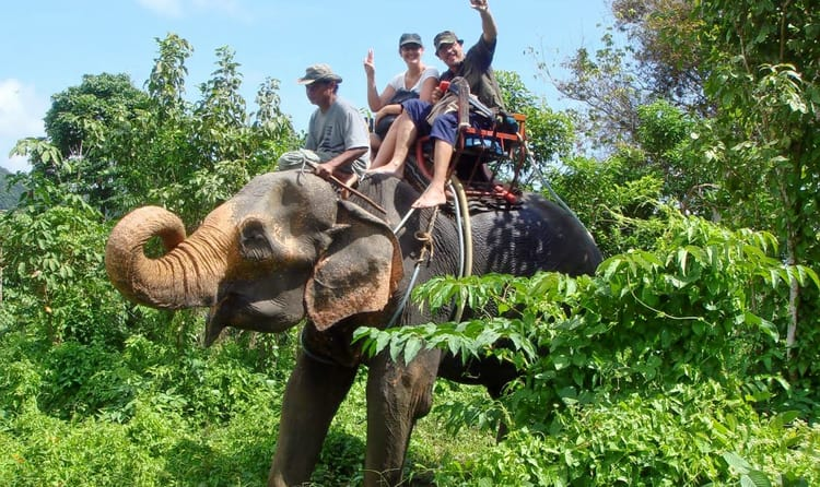 Go For An Elephant Ride In Munnar