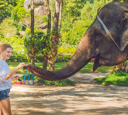 Pinnawala Elephant Orphanage Tour from Kandy - Flat 25% off