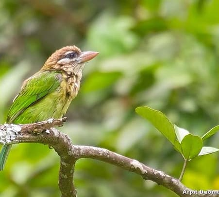 Bird Watching Experience in Wayanad