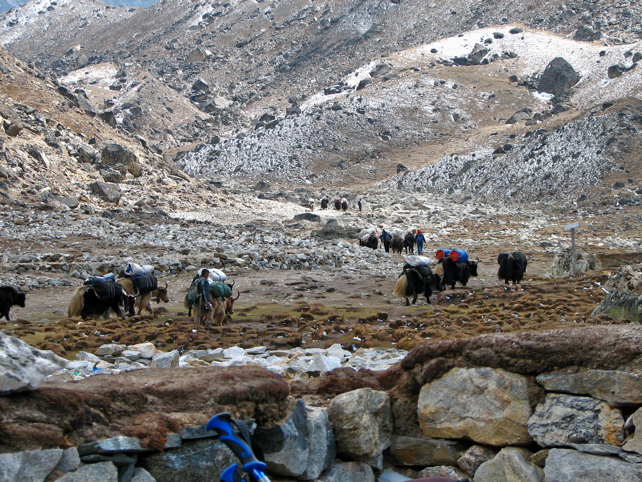 1486972159_nepal_-_sagamartha_trek_-_165_-_yak_train_to_ebc_(497677658).jpg