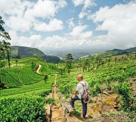 Tea Estate Trail with Tuk Tuk Ride, Banderawala