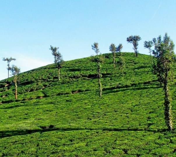 Kerala, Spice Land Holidays