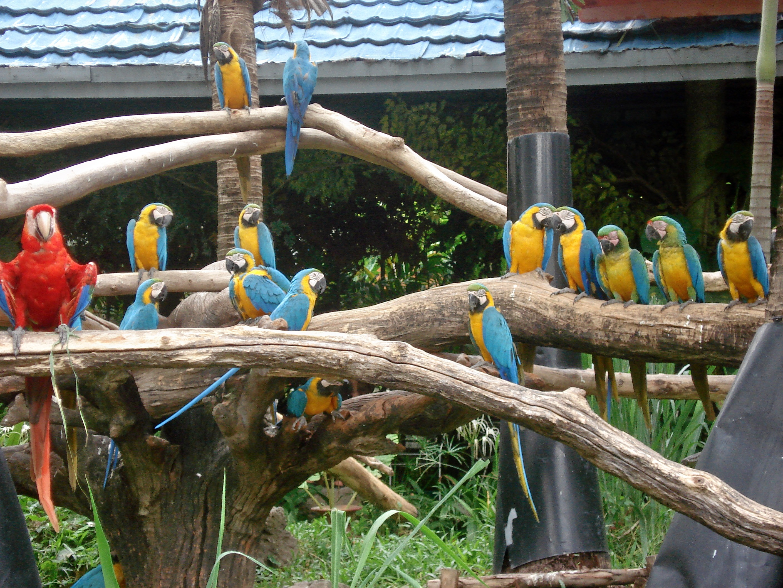1464928861_ara_macaws_at_safari_world_-bangkok-8b.jpg