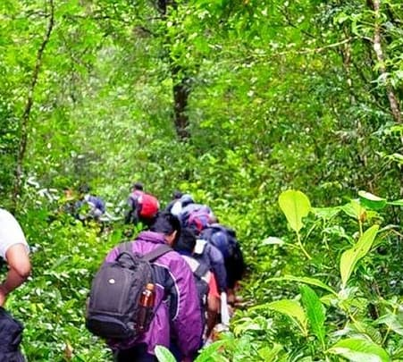Nature Camp In Wayanad