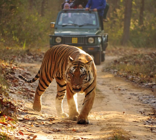 Umred Wildlife and Tiger Photography Expedition in Nagpur