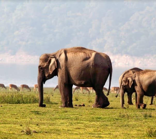 Jim Corbett National Park Tour: Know Your Forests