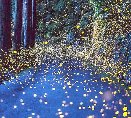 Fireflies and Monkey Feeding Tour at Selangor in Malaysia