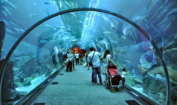 13fec14ec5 21Meet The Sharks - Dubai Aquarium and Underwater Zoo