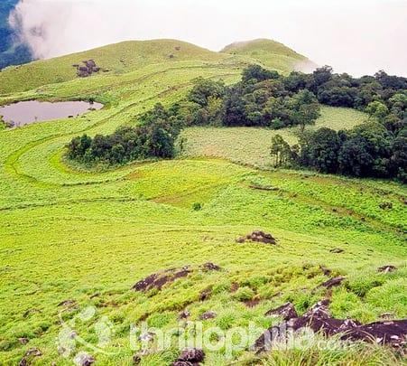 Chembra Trek and Soochipara Falls visit, Wayanad