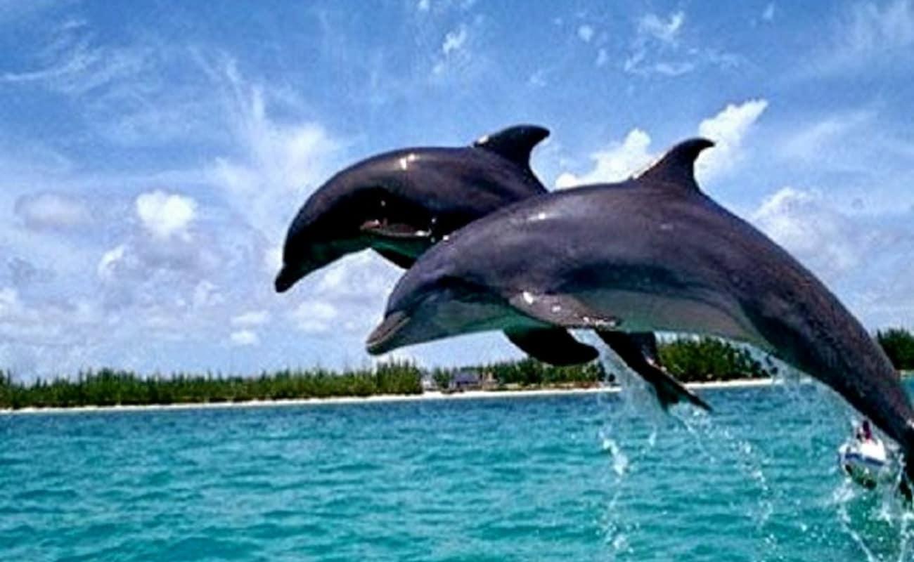 Dolphin Trip In Goa Thrillophilia