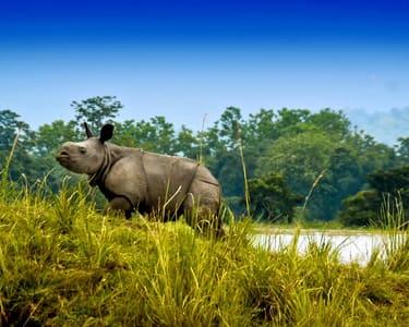 7 Days Kaziranga Meghalaya Wildlife Trip