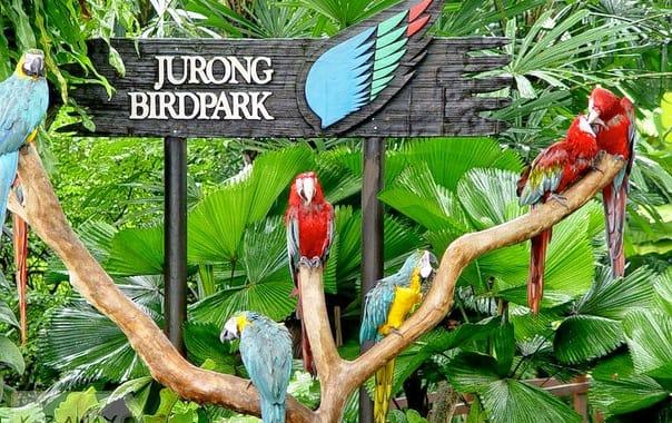 1484035627_jurong-birdpark_2.jpg
