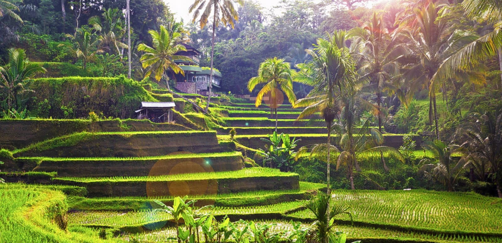 Tegalalang Rice Terrace Tour With Monkey Forest Goa Gajah Flat 10 Off