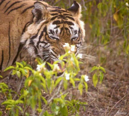 Sariska National Park Tour Flat 60% off