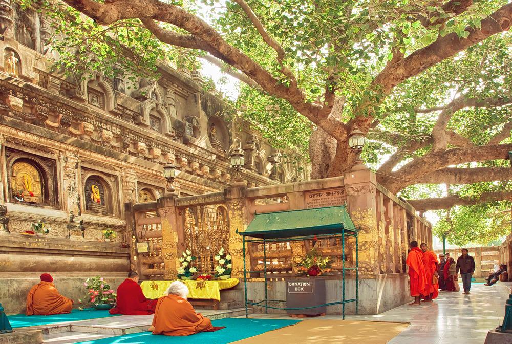 1593095656_bodhgaya_tree.jpg