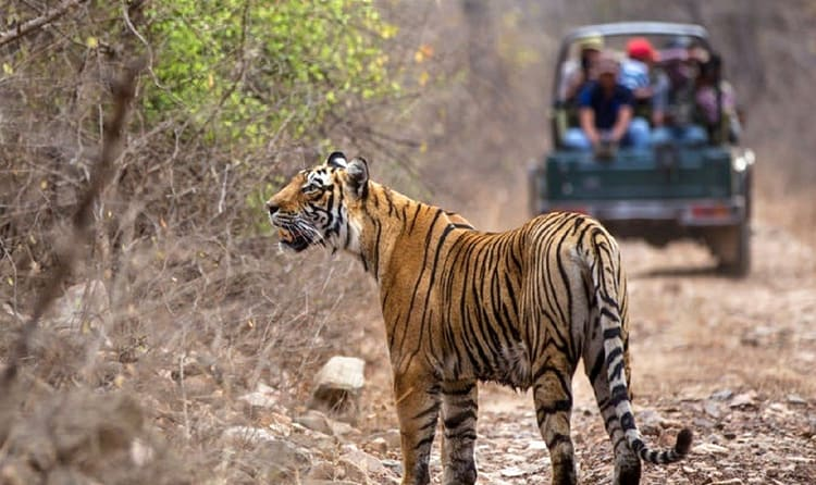 Aareman-Travels-Rajasthans-tour-package