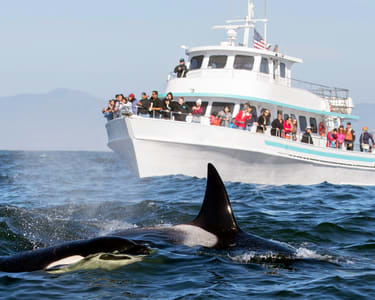 Whale Watching in Mirissa - Flat 25% off