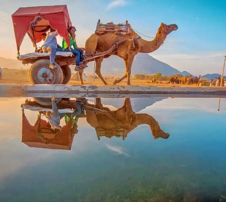 Sunset Camel Safari in Pushkar