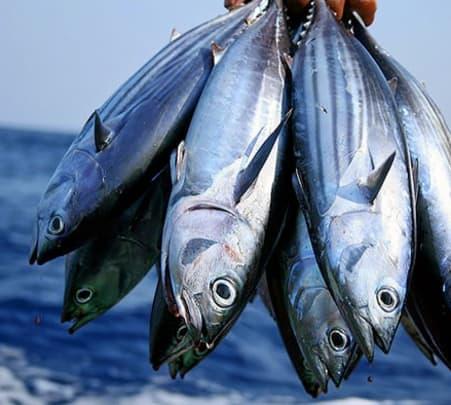 Fishing Tour in Maldives