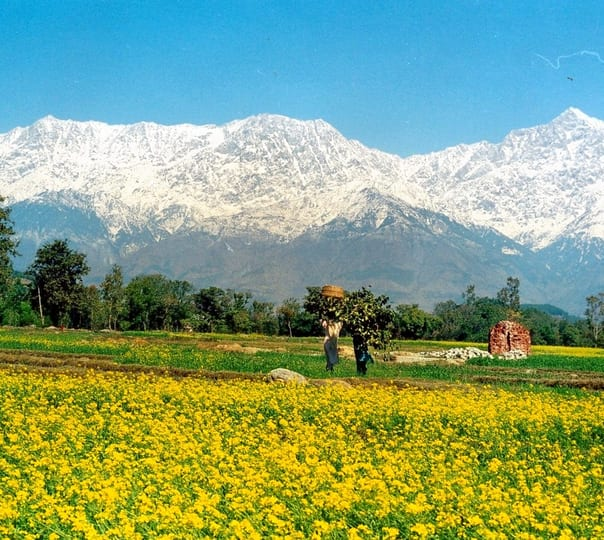 Hire a Guide in Kangra