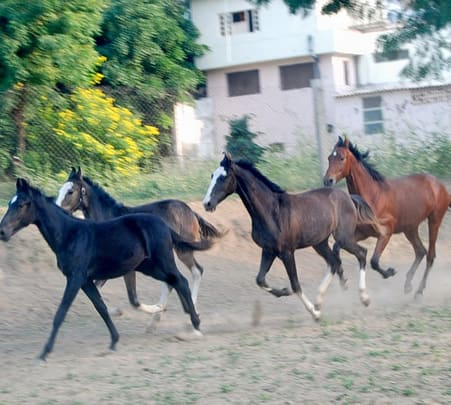 Horse Safari at Ranakpur in Rajasthan