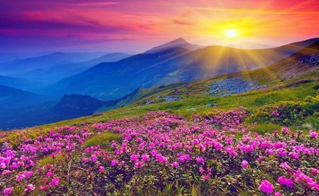 valley of flowers trek uttarakhand 2017 thrillophilia
