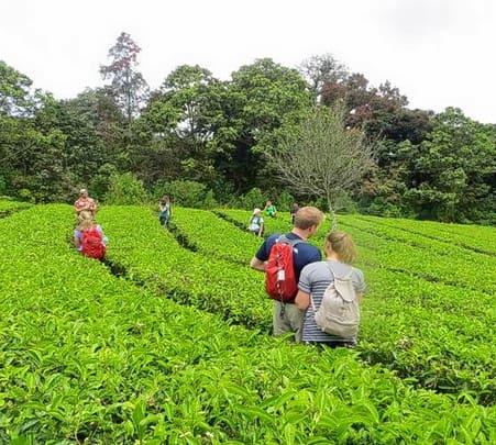 Visit Spice garden in Thekaddy