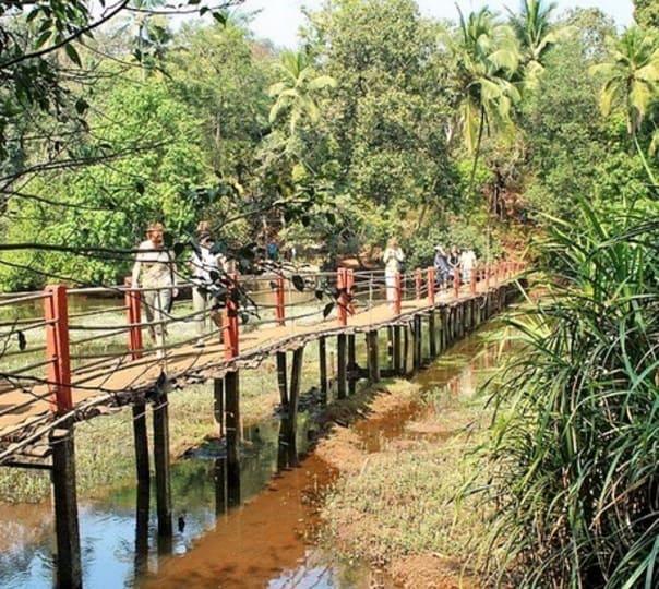 Spice Plantation Tour in Goa