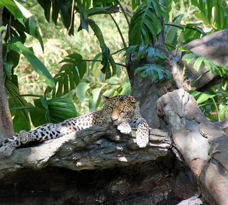 Leopard Spotting and Wild Life Safari in Bali