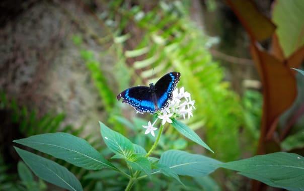 1524227885_mumbai_zoo.jpg