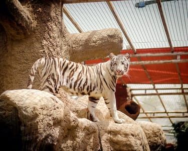 Emirates Park Zoo and Resort in Abu Dhabi Flat 40% off