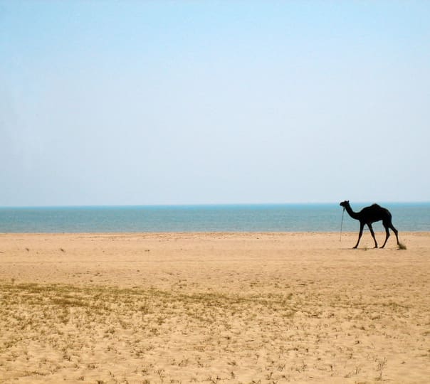 Wildlife Tour in Gujarat For 6 Days
