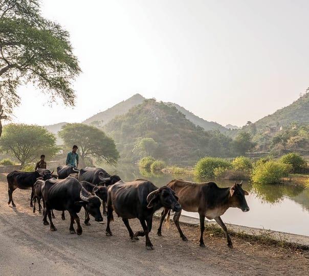Morwaniya to Badi Trek near Udaipur