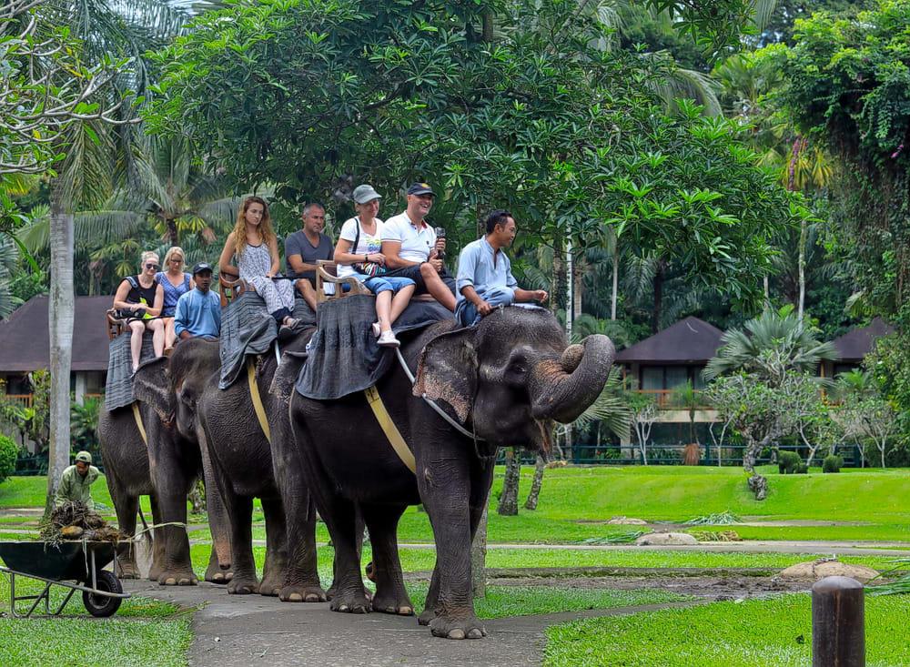Experience Wildlife at Bali Zoo
