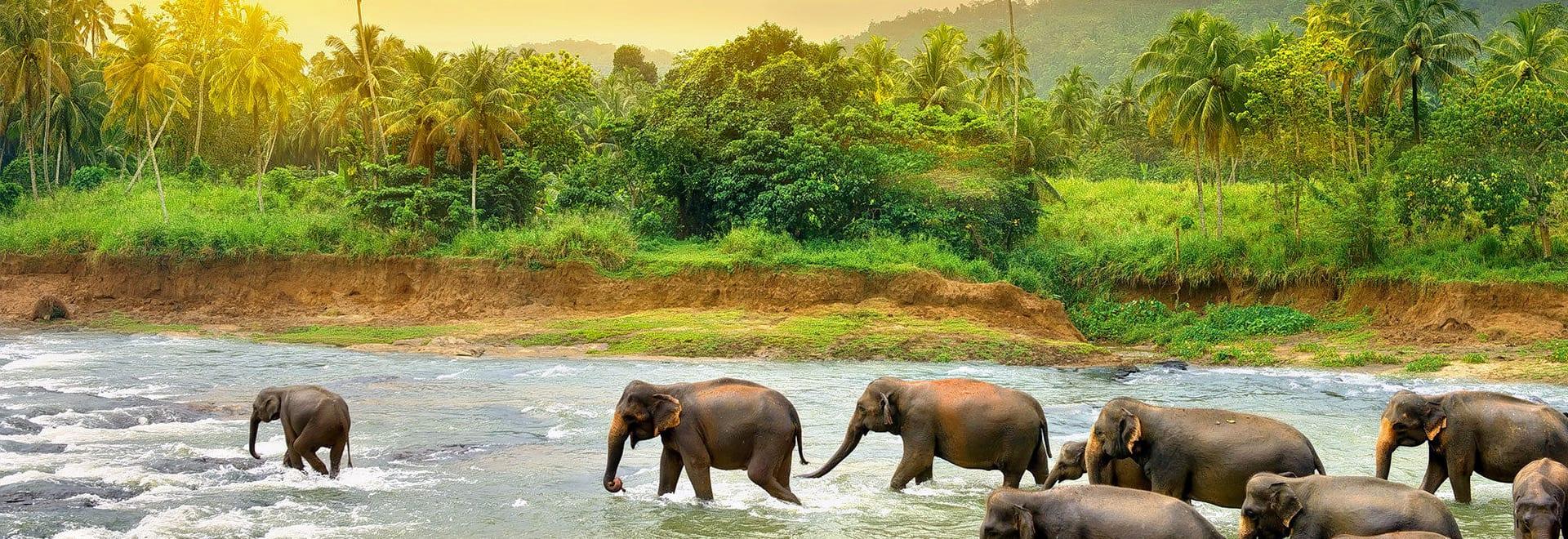 1520338125_elephant.jpg